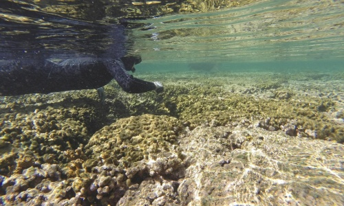 Coral Bleaching: Just 1C to 2C of further warming in areas of the reef already under pressure could push it beyond what it can recover from. Photograph: Dan Dennison/AP