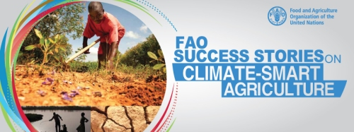 FAO success story