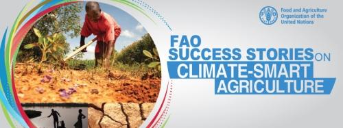FAO success story