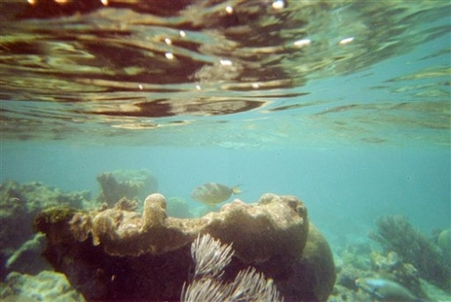 This April 6, 2005 file photo shows a coral reef and fish on a snorkeling trail off Buck Island near St. Croix, U.S. Virgin Islands. U.S. scientists on Tuesday, April 7, 2015 completed a nearly two-week mission to explore waters around the U.S. Virgin Islands as part of a 12-year project to map the Caribbean sea floor and help protect its reefs. (AP Photo/Brent Hoffman, File)