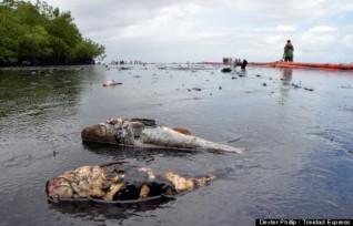 Result of spill in Trinidad and Tobago, December 2014