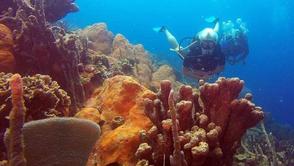 Coral colony off the Rosario Islands, Colombia | Photo: EFE