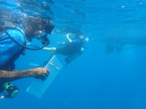 Mark Archibald of Antigua and Barbuda Fisheries Division collects data during a dive in The Narrows