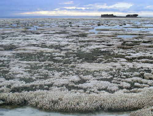 Huge swathes of the Great Barrier Reef have suffered coral bleaching in 2016. University of Oregon, CC BY-SA