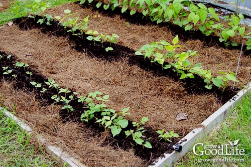 Photo Credit: Grow A Good Life - Mulching