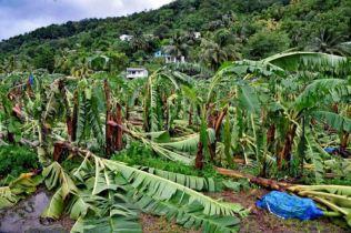 Storm-ravaged banana plantation. Photo Credit: Horst Michael Vogel